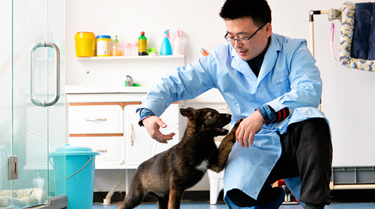 In China began to train the first cloned police dog