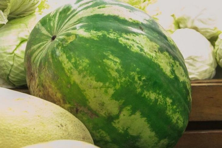 x23 - Japan sold the most expensive watermelon in history